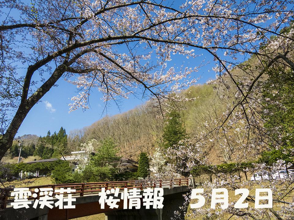 さくら2 (1)
