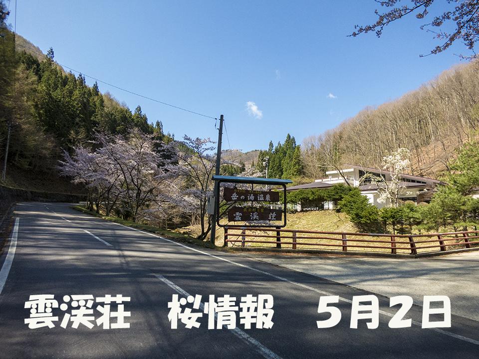 さくら (1)